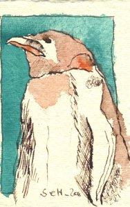 Pinguin blau Nr. 4 - Zeichnung von Susanne Haun - Tusche auf Bütten - 11 x 7,5