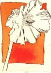 Blütenorange - Zeichnung von Susanne Haun - Tusche auf Bütten - 11 x 7 cm
