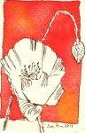 Blütenzinnober - Zeichnung von Susanne Haun - Tusche auf Bütten - 11 x 7 cm