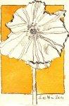 Blütenjaume - Zeichnung von Susanne Haun - Tusche auf Bütten - 11 x 7 cm