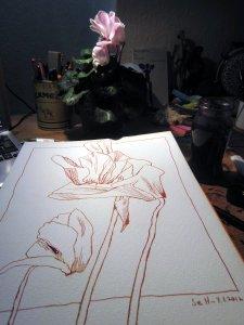 Usambaraveilchen - Foto und Zeichnung von Susanne Haun