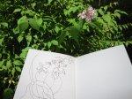 Möglichkeiten des Scetchbooks - Foto von Susanne Haun