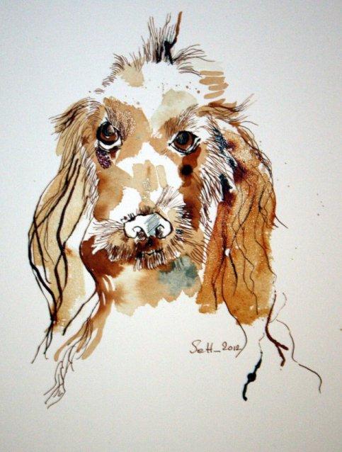 Spaniel - Zeichnnung von Susanne Haun - Tusche auf Bütten - 40 x 30 cm