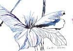 Blauregen, 17 x 13 cm, Tusche auf Bütten (c) Zeichnung von Susanne Haun (2)