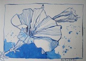 Glockenblumen (c) Zeichnung von Susanne Haun