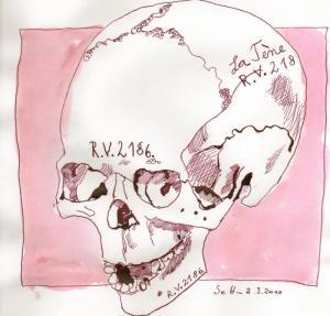 Vanitas Stilleben Totenkopf Halbprofil (c) Zeichnung von Susanne Haun