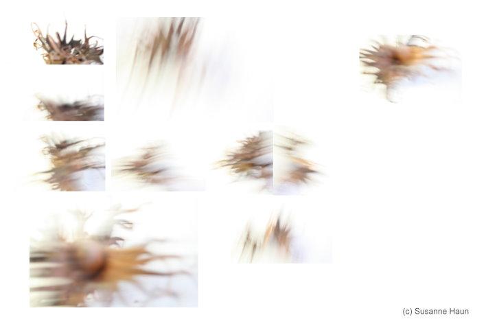 Intelligenz und Bewegung II (c) Foto von Susanne Haun