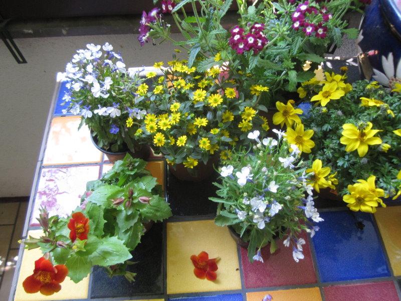 Blumen Pflanzen Balkon