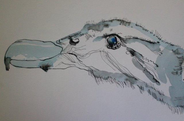 Die Tage des Kondors, 23 x 31 cm, Tusche auf Bütten (c) Zeichnung von Susanne Haun (3)
