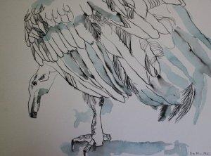Die Tage des Kondors, 23 x 31 cm, Tusche auf Bütten (c) Zeichnung von Susanne Haun