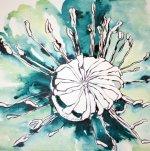 Blauer Mohn Version 2 30 x 30 cm Tusche auf Bütten (c) Zeichnung von Susanne Haun