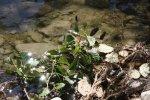 Libellen am Flußufer des Montone (c) Foto von Susanne Haun