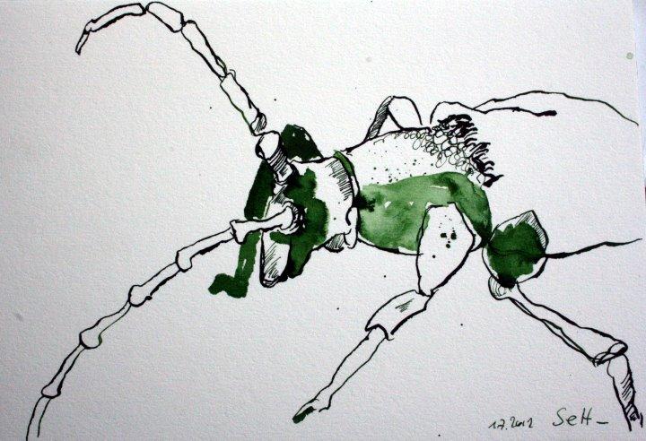 Käfer 17 x 22 cm Tusche auf Bütten (c) Zeichnung von Susanne Haun