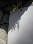 Mir gefällt das Schattenspiel auf dem leeren Blatt (c) Foto von Susanne Haun