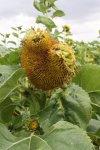 Mir gefallen die verblühten Pflanzen (c) Foto von Susanne Haun