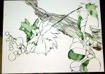 Wein (c) Zeichnung von Susanne Haun