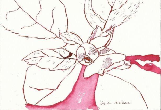 Azalee 17 x 22 cm Tusche auf Bütten (c) Zeichnung von Susanne Haun