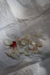Transport der Blütenblätter vom Atelier nach Hause (c) Foto von Susanne Haun