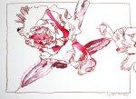 Azalee 24 x 32 cm cm Tusche auf Bütten (c) Zeichnung von Susanne Haun
