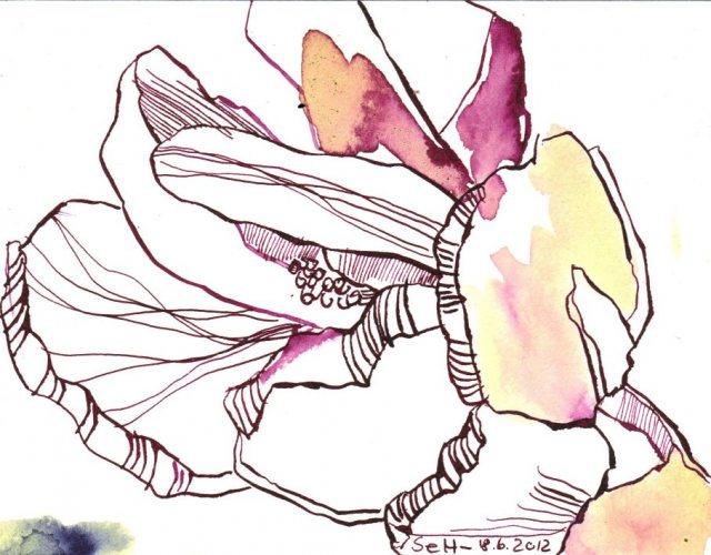 Himbeerfarbende Blüte 12 x 17 cm Tusche auf Bütten (c) Zeichnung von Susanne Haun