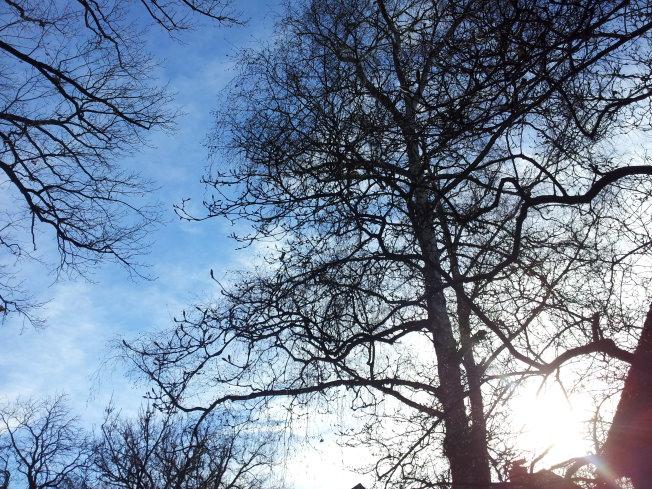 In den Himmel schauen (c) Foto von Susanne Haun
