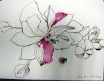 Rosa Blüte 30 x 40 cm Tusche auf Bütten (c) Foto und Zeichnung von Susanne Haun