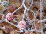 Kandierte Winterlandschaft Vers. 1 (c) Foto von Susanne Haun