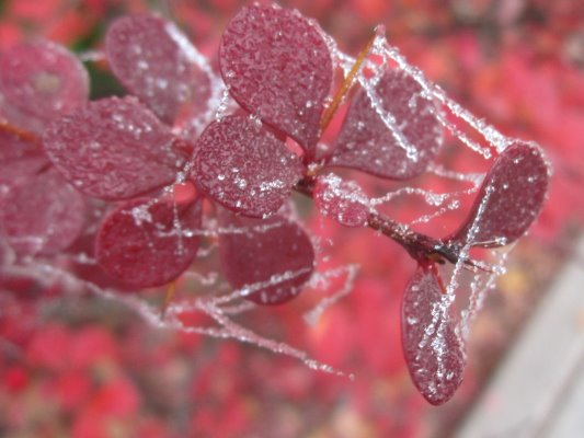 Kandierte Winterlandschaft Vers. 3 (c) Foto von Susanne Haun