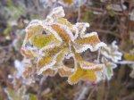 Kandierte Winterlandschaft Vers. 6 (c) Foto von Susanne Haun