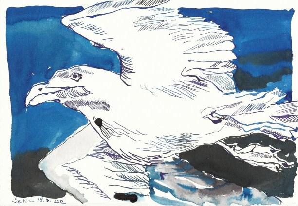 Möwe 17 x 22 cm Tusche auf Bütten (c) Zeichnung von Susanne Haun