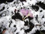 3 Am Berliner Stadtrand eine Blume im Schnee (c) Foto von Susanne Haun