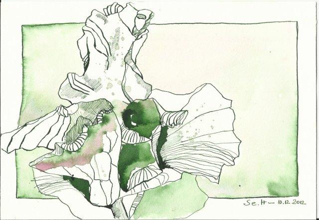 Vanitas - erfrorene Azalee grün 17 x 22 cm Tusche auf Bütten (c) Zeichnung von Susanne Haun
