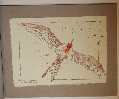 10 Ein Fregattvogel (c) Zeichnung von Susanne Haun