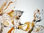 5 Windblume 30 x 40 cm (c) Zeichnung von Susanne Haun