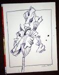 Iris 40 x 30 cm Tusche auf Bütten (c) Zeichnung von Susanne Haun
