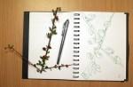 Zweig (c) Zeichnung von Susanne Haun