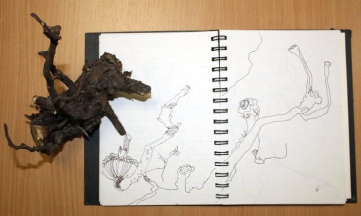 Wurzel (c) Zeichnung von Susanne Haun