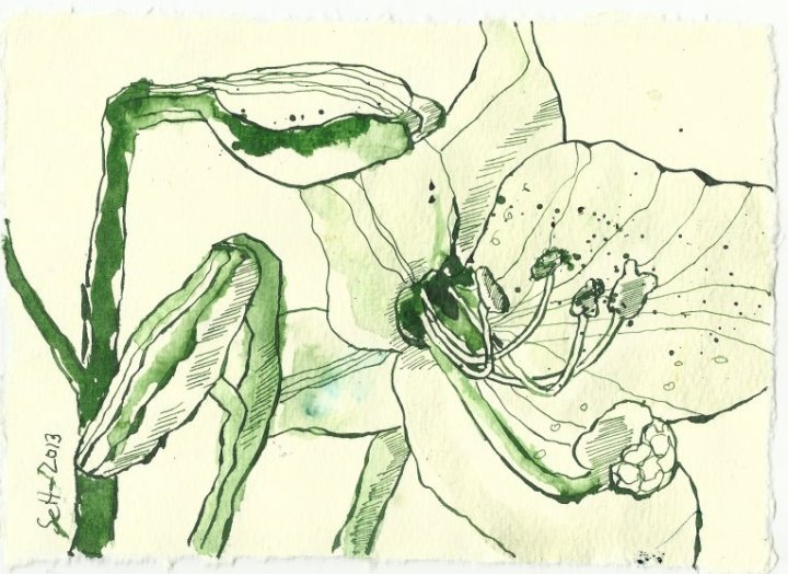 Blatt 106 Geknickte Lilien (c) Zeichnung von Susanne Haun