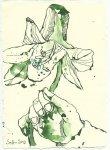 Blatt 107 Geknickte Lilien in den Händen (c) Zeichnung von Susanne Haun