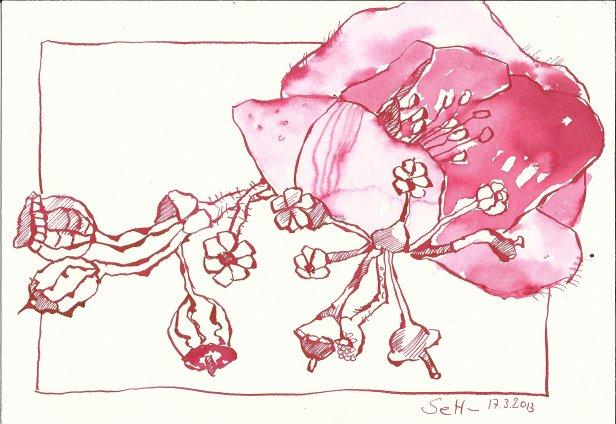Anemone 17 x 22 cm Tusche auf Bütten (c) Zeichnung von Susanne