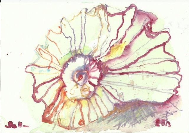 Die gefundene Schnecke (c) Zeichnung von Susanne Haun