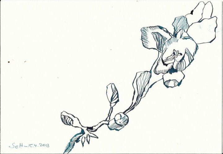 BBlaue Fresien Version 3 (c) Zeichnung von Susanne Haun