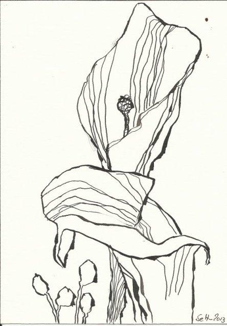 Muttertagblume (c) Zeichnung von Susanne Haun