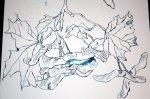 Ahorn - Ausschnitt Rolle (c) Zeichnung von Susanne Haun