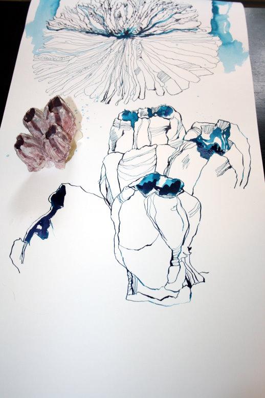 Ausschnitt Rolle Nr. 3 - zweite Koralle (c) Zeichnung von Susanne Haun
