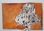 Tagetes (c) Zeichnung von Susanne Haun