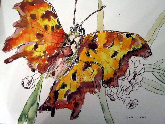 Schmetterling (c) Zeichnung von Susanne Haun