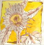 Sonnenblume (c) Zeichnung von Susanne Haun