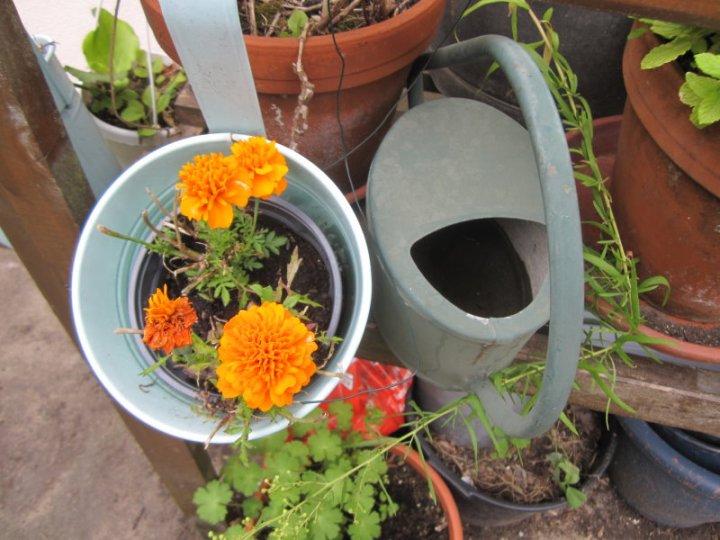 Im Garten von Hannah Höch (c) Foto von Susanne Haun