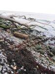 Eindrücke von der Insel Rügen (c) Fotos von Susanne Haun